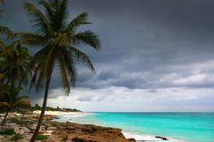 Caribbean stormy day palm trees in Tulum Mexico Kuvituskuvat