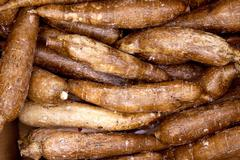 Cassava yucca rhizomes vegatable food pattern Stock Photos