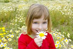 Blond little girl smeling daisy spring flower meadow Stock Photos