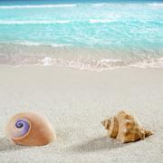beach sea snail shell tropical white sand closeup - stock photo