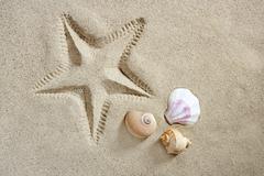beach sand starfish print shells and sea snail summer - stock photo