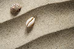 closeup macro shell sea snail beach sand wavy - stock photo