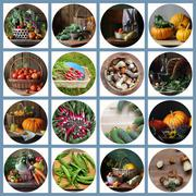 Collage from still lifes with vegetables and mushrooms. Stock Photos