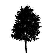 Stock Illustration of Tree Silhouette Isolated on White Background. Vector Illustratio