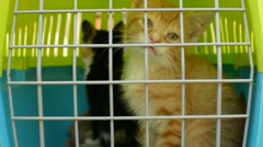 A red and calico kitten in a pet carrier Stock Footage