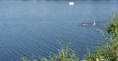 Swimmer Distantly Man is Swimming in The Lake River Pond White Bouy is in the Stock Footage