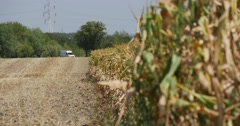 Plowed Field White Car Has Turned Corn Stalks Are Swaying at the Wind on Stock Footage