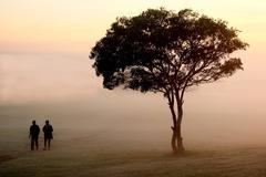 Misty Morning Walk - stock photo