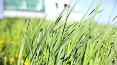 Stock Video Footage of swaying grass beside the road