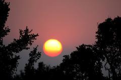 African Sunset Kuvituskuvat