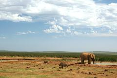 Addo Elephant Waterhole - stock photo