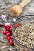 Cornel berries with herbaceous medicinal shrub - stock photo