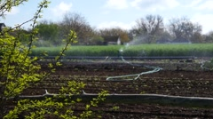 Watering irrigation of infield vegetable garden by spraying water - eco farm Stock Footage