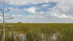 Timelapse - Everglades National Park from Pahayokee Overlook Stock Footage