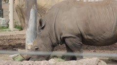 Rhino Eating at the Zoo Stock Footage