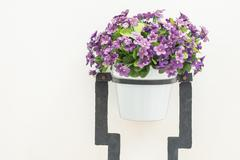 Stock Photo of Flower vase on white wall background