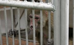Monkey in zoo of Sukhum, Abkhazia Stock Photos