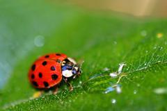 Lady Bug (6408) - stock photo