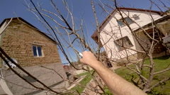 Man Cutting Tree With Secateurs Stock Footage