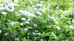 Forest flowers white. Stock Footage
