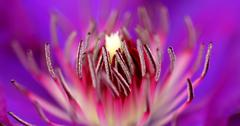 Inside of a flower - stock photo