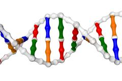 Simplified DNA helix - stock illustration