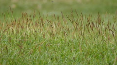 Stock Video Footage of Grass swaying on meadow.