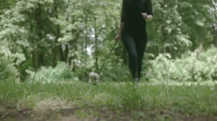 Pekinese dog in nature running with owner Stock Footage