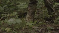 Hunter walking through the woods Stock Footage