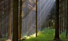 Mystical forest - stock photo