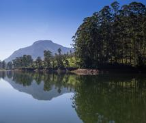pang ung , reflection of pine tree in a lake - stock photo
