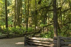 Cathedral Grove Trails - stock photo