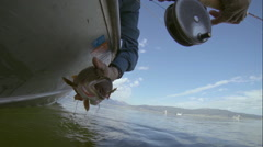Man Pulls Fish Out of Water Stock Footage