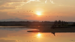 Geese Fly Through Sunset on Lake Stock Footage