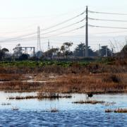 wetland - stock photo