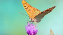 Fantastic Butterfly On Flowers slow motion macro Stock Footage