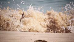 Feather in Beach Sand Whit Waves and People Feet Walking Background (Shot 2) Stock Footage