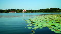 Serene Lacustrine Landscape With Lotus Leaves Stock Footage