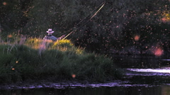 Fishing the Mayfly Hatch at Sunset Stock Footage