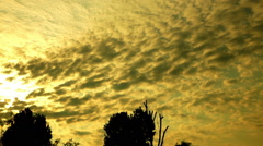 Clouds. Sunrise. Silhouettes of trees. Pan. Stock Footage