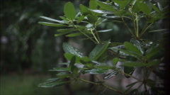 Stormy day on leaves 1 Stock Footage