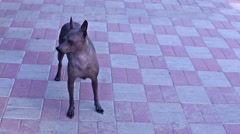 The dog in the yard Stock Footage
