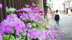 Tourist walking along the street with purple flower on the side Stock Footage