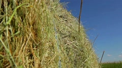 Wave Sheaf of hay closeup. Harvesting of straw on a farm. Stock Footage