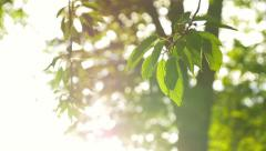 rays of the sun through the leaves of a tree - stock footage