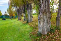 Green lawn and trees at the park - stock photo