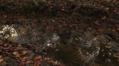 Small muddy creek, stream. - stock footage