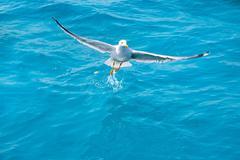 bird seagull on sea water in ocean - stock photo