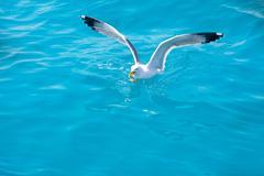 Stock Photo of bird seagull on sea water in ocean
