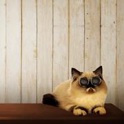 Cute persian cat on the table Kuvituskuvat
